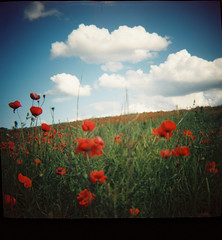 Out of fifteen... (Trapac) Tags: uk flowers blue red summer england 120 film field clouds mediumformat square landscape countryside fuji superia country meadow peak plasticfantastic 120film diana poppy poppies remembrance pastoral dianaf 2008 poppyfields watford bucolic plasticcamera 400iso lestweforget remembering fujisuperia 166 wmh vintagediana originaldiana dianaroll3 flickrcollectionongetty tracypackerphotography wwwtracypackercom