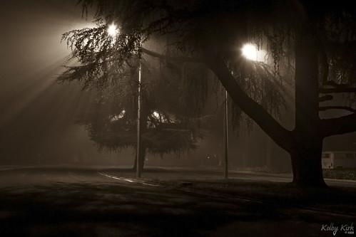 Fog 2008 3