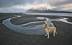 k @ kluane (eyebex) Tags: dog pet sun lake snow canada fall k animal clouds creek landscape deleteme10 delete7 71 flats domestic saveme9 getty save10 uncool 107 910 sheepmountain kolya savedbythedeletemeuncensoredgroup kluanelake kluanepark cool7 iceboxcool jaketpwide
