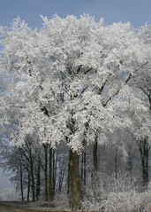 "Dreaming of a white Christmas (Clare L H) Tags: winter cold tree ice canon wow frost soe goldenheart naturesfinest blueribbonwinner flickrsbest bej golddragon abigfave omot platinumphoto anawesomeshot aplusphoto irresistiblebeauty theunforgettablepictures theunforgettablepicture platinumheartaward theperfectphotographer landscapesofvillagesandfields damniwishidtakenthat panoramafotográfico dragondaggerphoto flickrclassique ""flickraward"""