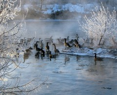 Iced (Nature_Deb) Tags: morning blue autumn trees winter brown white mist snow reflection fall ice nature water river landscape island frozen geese hoarfrost platte soe mywinners abigfave diamondclassphotographer overtheexcellence