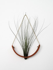 Hanging Air Plant Cradle (Michael McDowell (mudpuppy)) Tags: plant terracotta air container tillandsia vase hanging terra planter airplant cotta cradle
