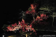 SUV_8717 (Cougar-Studio) Tags: castle nikon kyoto 京都 d3 nijo 二条城 nijocastle 世界遺產 元離宮 20110404