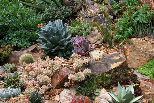 lot o' succulents