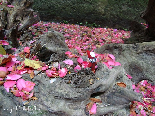 Isola Madre poppet with petals