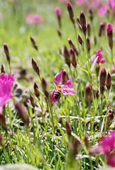 20110514 FUJI SUPERIA 100 20110514 2_30 (Yunhyok Choi) Tags: plant flower macro bug insect fuji pentax superia bee honey 100 smc fujicolorsuperia100 fa50  z1p smcpfa50mmf28