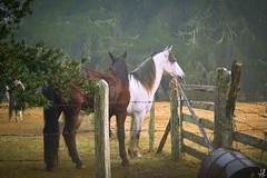 Manhã no sul de Minas (Andressa Rafaela) Tags: horse farm cavalo fazenda égua andressarafaela pfbmag abouttabs
