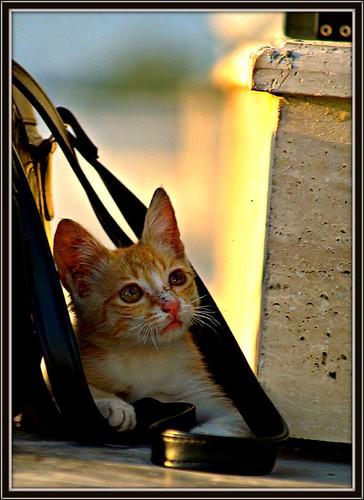 Tuerkei Pamukkale: four? cat eyes 17.593.15
