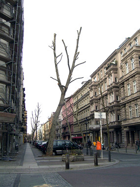 Kahlgeschnittene Bäume