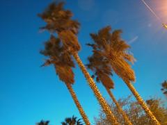 Every Streetlight (Barstow Steve) Tags: longexposure night palms utata:project=nocturnal2