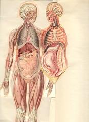 anatom 37 4a