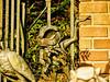 Disney - Pet Cemetery Toad (Express Monorail) Tags: sculpture orange usa colors cemetery animal statue movie orlando october florida crossprocess character magic details gimp kingdom 2006 disney haunted disneyworld mansion wdw waltdisneyworld walt hdr highdynamicrange themepark mrtoadswildride magickingdom hauntedmansion goldenhour attractions cartooncharacter waltdisney libertysquare mrtoad thehauntedmansion petcemetery lucisart disneycharacter toadhall sonydsch2 disneyparks dynamicphotohdr paintshopprophotox2 jthaddeustoad mybox300 disneyphotochallenge