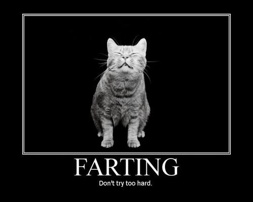Farting-Cat