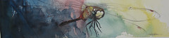 dragonfly060808 (Jennifer Kraska) Tags: art pen watercolor dragonfly jennifer kraska
