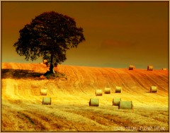 SUMMER GOLD! (Edward Dullard Photography. Kilkenny, Ireland.) Tags: kilkenny summer sky sun painterly tree art sol nature sunshine clouds landscape gold corn scenery haystacks  magical carlow   kps    fineartphotos anawesomeshot  infinestyle ysplix edwarddullard alemdagqualityonlyclub magicdonkeysbest kilkennyphotographicsociety