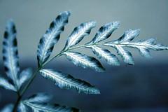 (Cla Leal) Tags: nature canon natureza passionphotography unlimitedphotos mylifeasahuman grouptripod