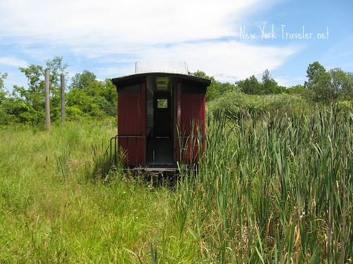 Caboose in the Reeds