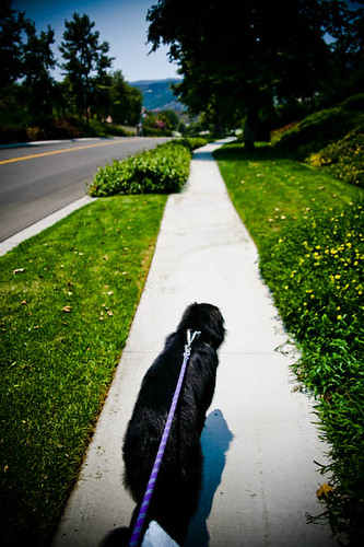 dog walk2