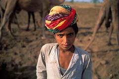 Pali to Pushkar (mattshonfeld) Tags: travel pakistan india wool asia cattle sale fair camel shave tribe sell pali pushkar trade hump rajasthan rebari arcatia