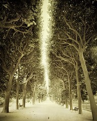 Return (IrenaS) Tags: park trees paris france bird sepia garden bench path fineartphotography irenesuchocki fineartphotograph wwwirenesuchockicom