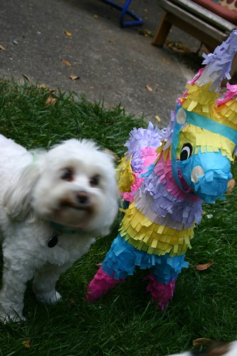 i love my pinata!