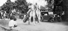 Parade 1920's (cosmorama) Tags: hawaii parade honolulu pau black38white