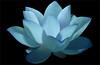 Flower / Blue flower / Lotus Flower / water / lily / water lily /  / Blue / nature / - IMG_0606 - Nelumbo Nucifera - , ハスの花, 莲花, گل لوتوس, Fleur de Lotus, Lotosblume, कुंद, 연꽃, (Bahman Farzad) Tags: blue flower macro nature water yoga peace waterlily lily lotus relaxing peaceful meditation therapy blueflower زهرة 莲花 گل lotusflower flowermacro lotusflowers اللوتس nelumbo macroflower bluelotus nelumbonucifera lotuspetal nucifera flowerblue flowerlotus lotuspetals ハスの花 لوتوس lotusmacro lotusflowermacro bluelotusflower lotusflowerpetals lotusflowerpetal