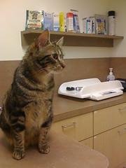 Ozu at the vet