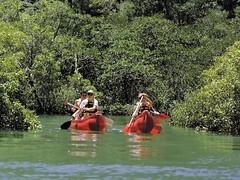Canoe Paddle @Kingfisher Bay Resort (Kingfisher