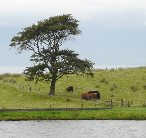 Tree at Crosbie Reservoir