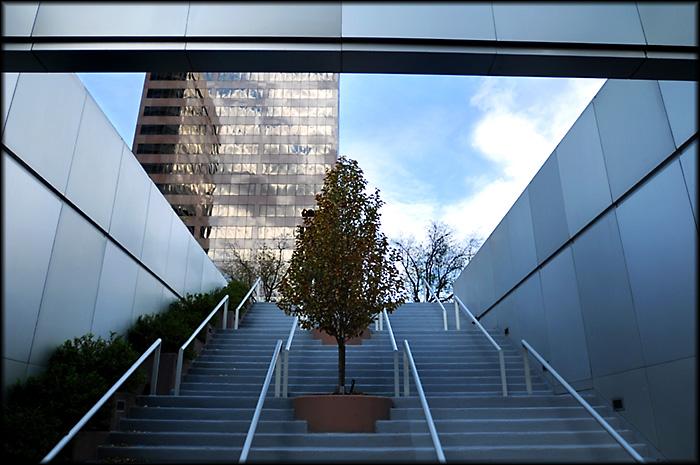 Urban_Tree.jpg
