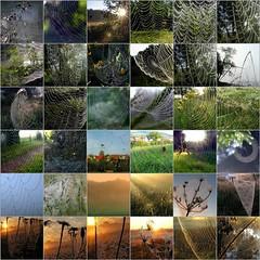 Its spider-web time! (:Linda:) Tags: collage germany village spiderweb drop thuringia cobweb dew droplet spinne spinnwebe wassertropfen tropfen trpfchen brden spiderwebcollage