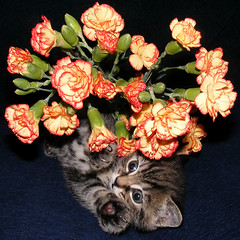Kitten & Flowers (Julia-D) Tags: cat kitten funny
