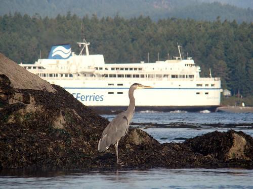 2008-10-11 Portland Island 074