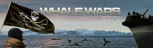 Kinship Circle - 2008-11-06 - Whale Wars 01