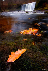 Wet Knees at Sgwd Ddwli (andrewwdavies) Tags: longexposure autumn trees winter cold wet water leaves wales river geotagged fun 1 dof tripod cymru breconbeacons depthoffield explore waterfalls shallow uncomfortable picks powys wideaperture pontneddfechan circularpolariser canonefs1022mmf3545usm rhaeadr ystradfellte brycheiniog giap autumnintowinter explored mossrocks rhaeadrau canoneos40d geo:lon=3585191 andrewwilliamdavies afonneddfechan bannaubrecheiniog pontmelinfach sgwdddwliuchaf geo:lat=51780374 gettyartistpicksaugsep091