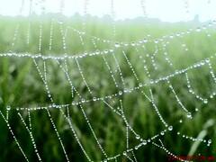 Web IN ROPAR FARM (Gour's) Tags: farm ropar