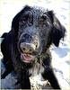 Sand Is Fun! (tine krogh) Tags: dog dogs sand gimp hund tine hunde digitalcameraclub krogh