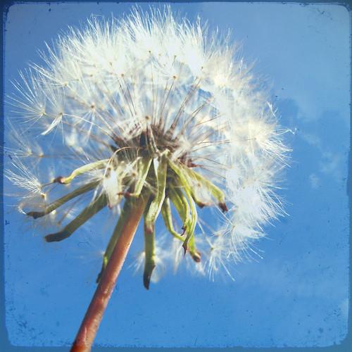 Seeds:  November 29, 2008