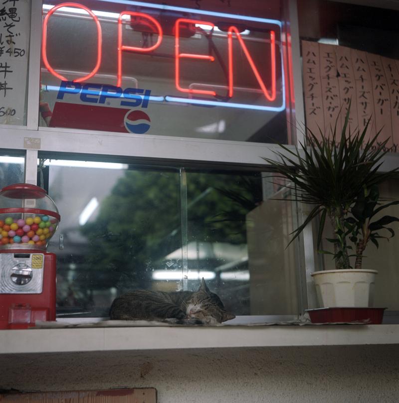 店番猫(サボリ中)