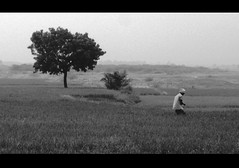 Farmer busy in his work (SenShots / Senthilmani's Photography) Tags: bw white man black tree nature field rural work canon photography grey blackwhite shadows village paddy branches wb shades m greenery lonely farmer agriculture whiteblack senthil angeltree msenthil senshots armsenthil senthilmani senshotsphotography senshots2008