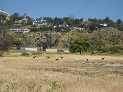 A herd of deer?