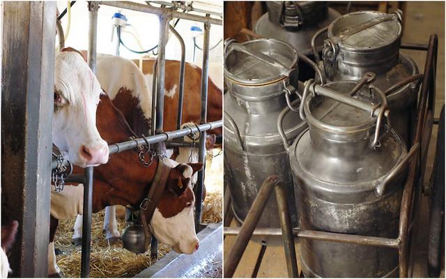 Les vaches et le lait (France)