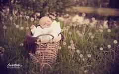 swietliste-fotografia-dziecieca-sesje-dzieciece-chrzest-plener-torun