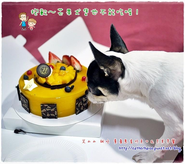 21 犬隻也不能吃芒果啦