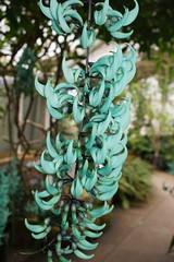 Botanic-Garden-4