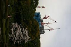 img_3528.jpg (DeviousZebra) Tags: tokyo sakura imperialpalace 20080402