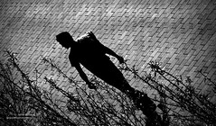 Crazy pavin man (JulesCanon) Tags: bw man male ikea mono belfast paving footpath nocolour braehillphotography juliegibson 7daysofshooting freestylefriday monosepia week19repeatingpatterns