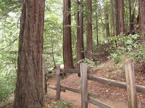 Fence, redwoods