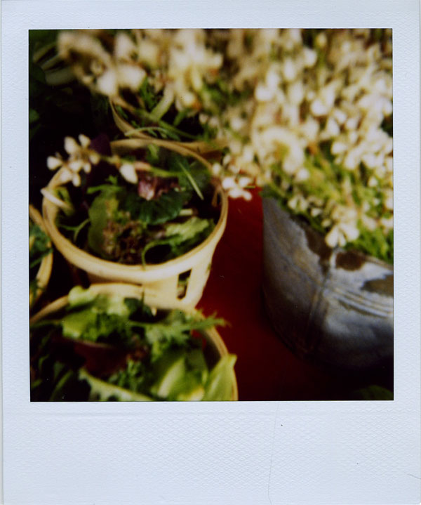 may30: salad & arugula flowers